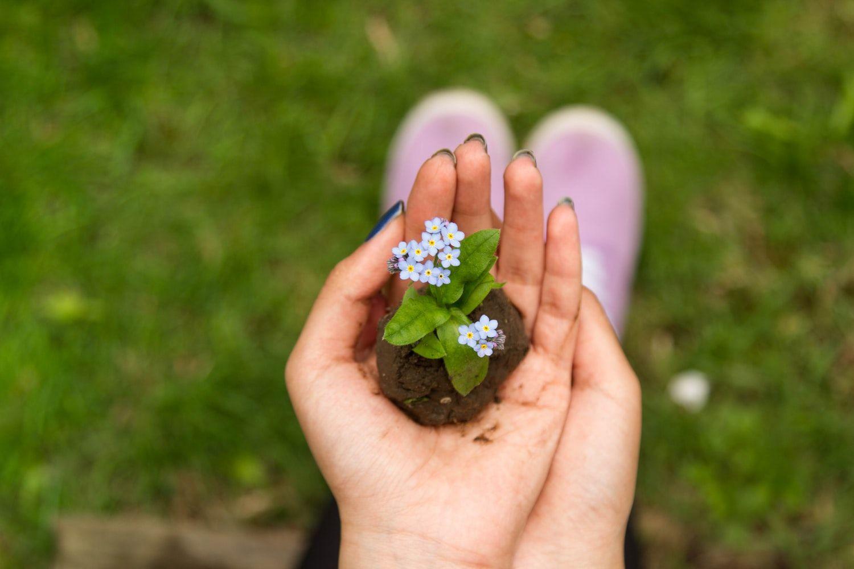 Цветок в руке