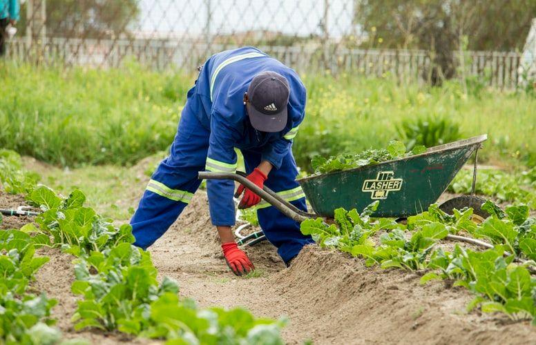 Инженер в сфере растений