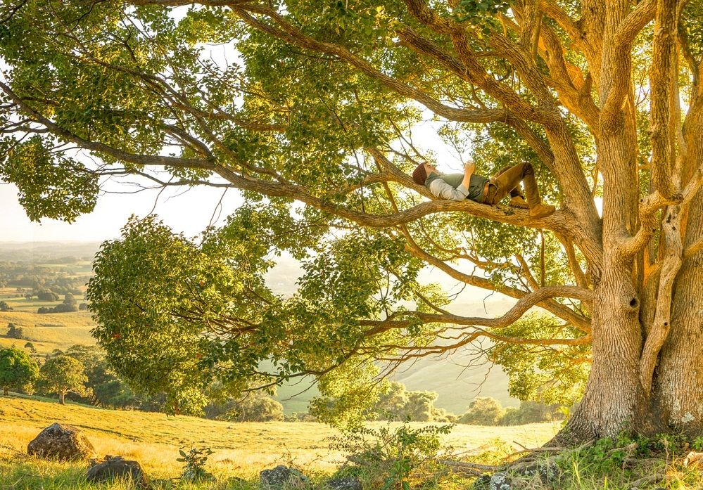 Человек на дереве
