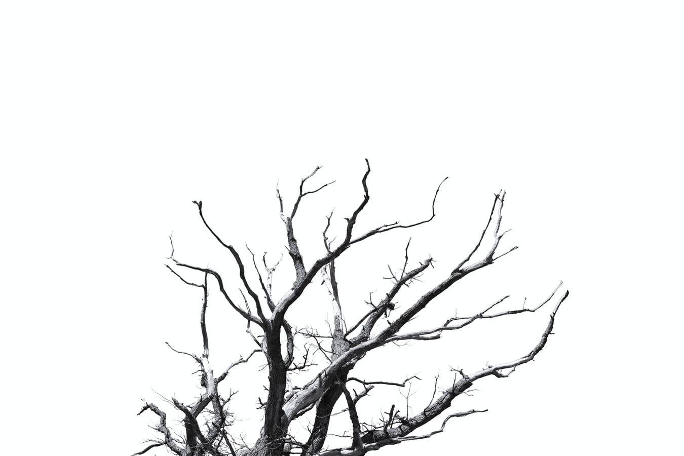 Деревья без листьев выдадут расстроенного человека